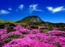 Du Lịch Hàn Quốc: Hà Nội – Seoul – Đảo Jeju – Everland – Trượt Tuyết Jangjipine (6N5Đ) Bay 5 Sao